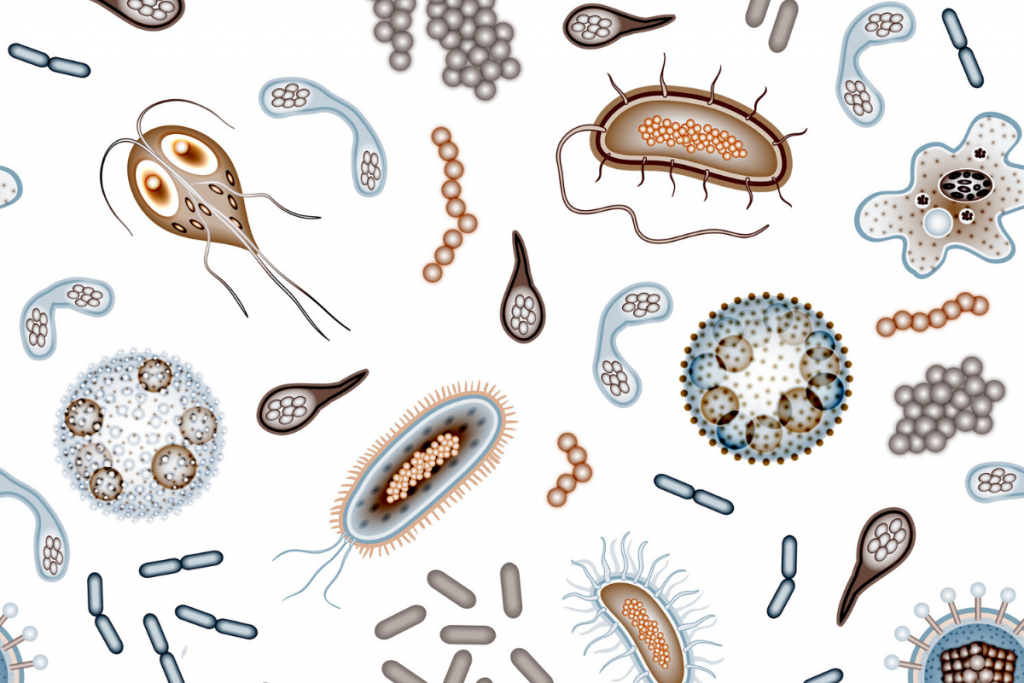 BACTERIA BUGS LIVING IN OUR GUT