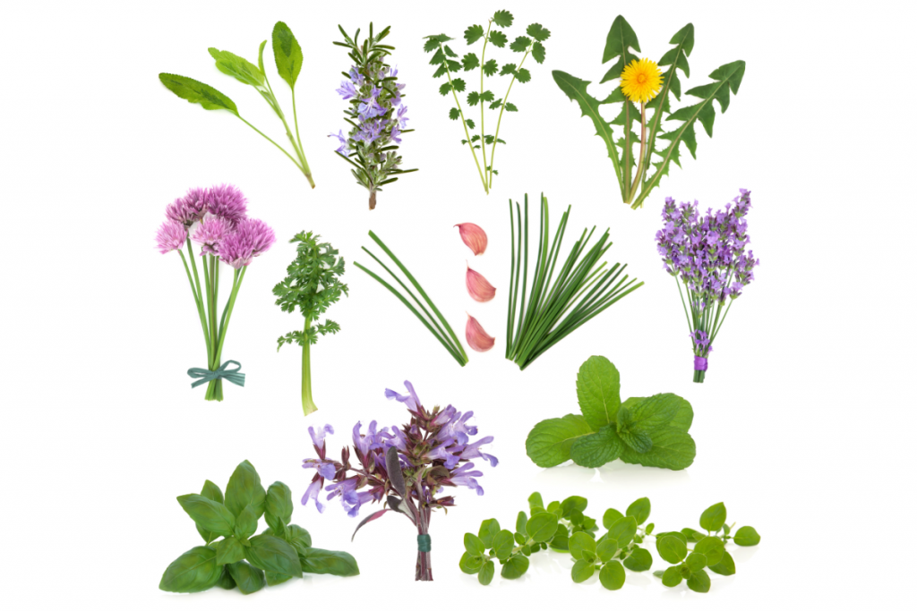 PICTURE OF VARIOUS FRESH HERBS